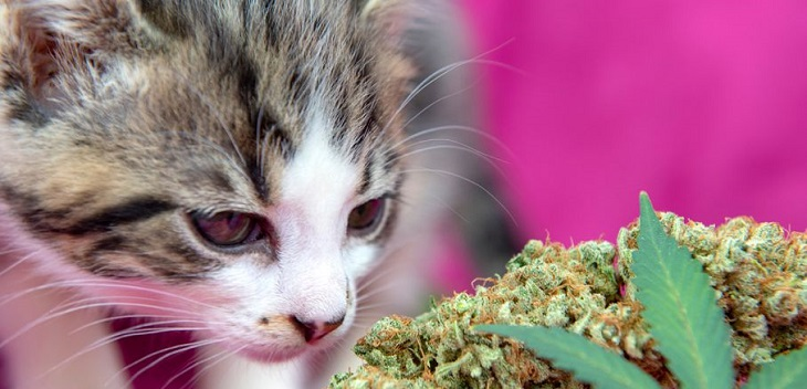 Why your pet needs CBD?