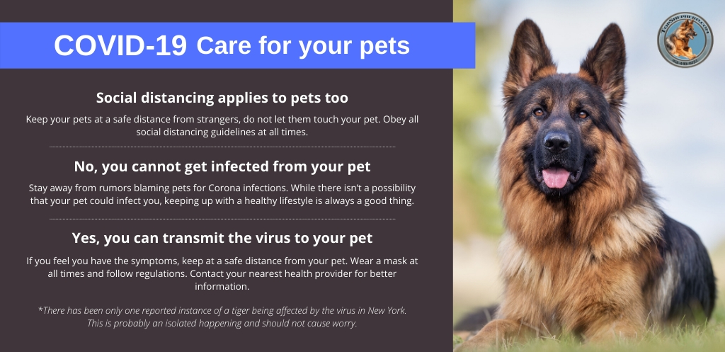 COVID-19 and your pet. What should you know?