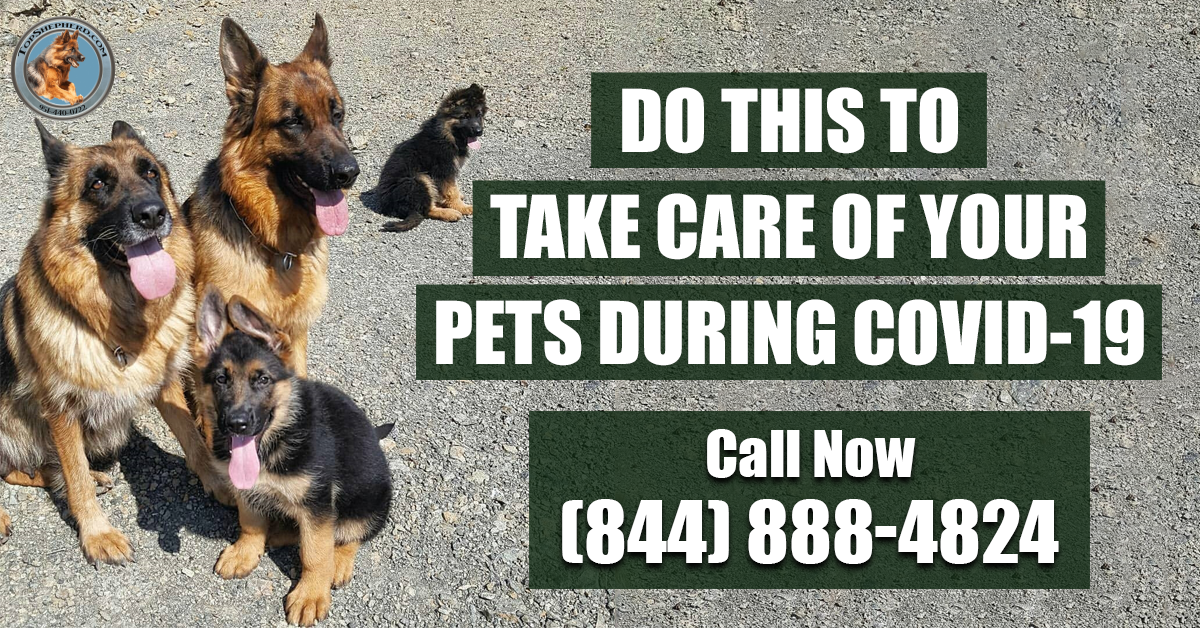 DO THIS TO TAKE CARE OF YOUR PETS DURING COVID-19