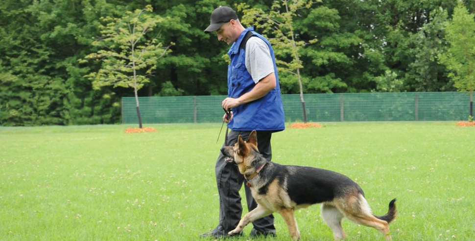 Importance of Good Genetics and Training in German Shepherd Dogs