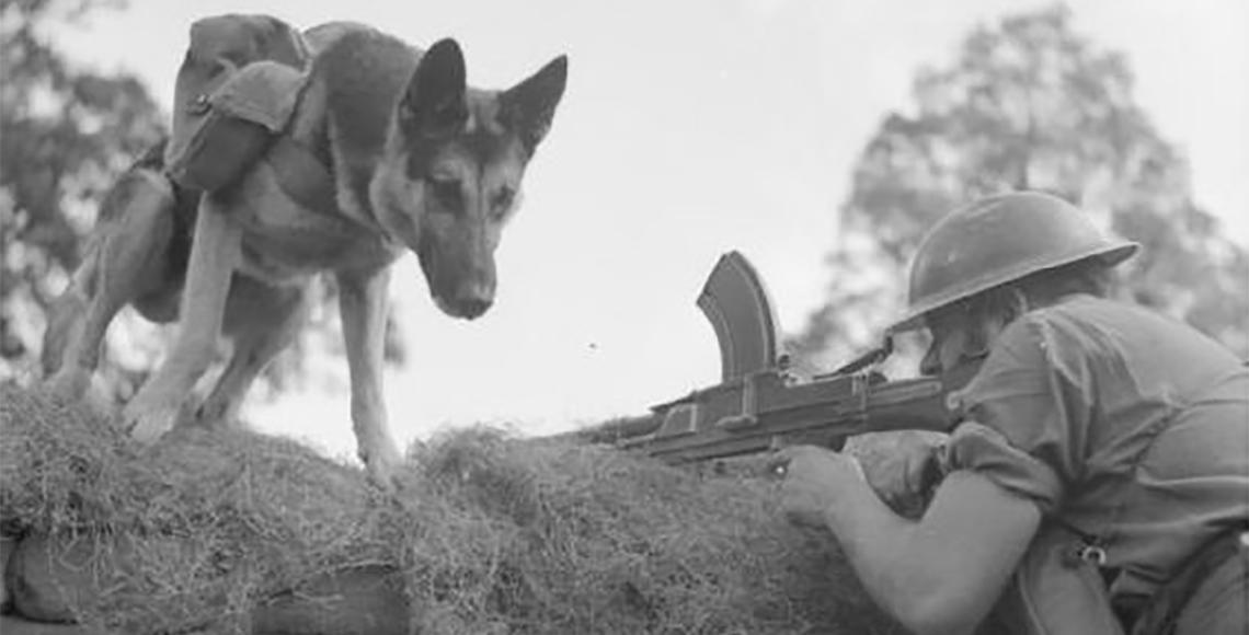 German Shepherds: WW1s incredible performers