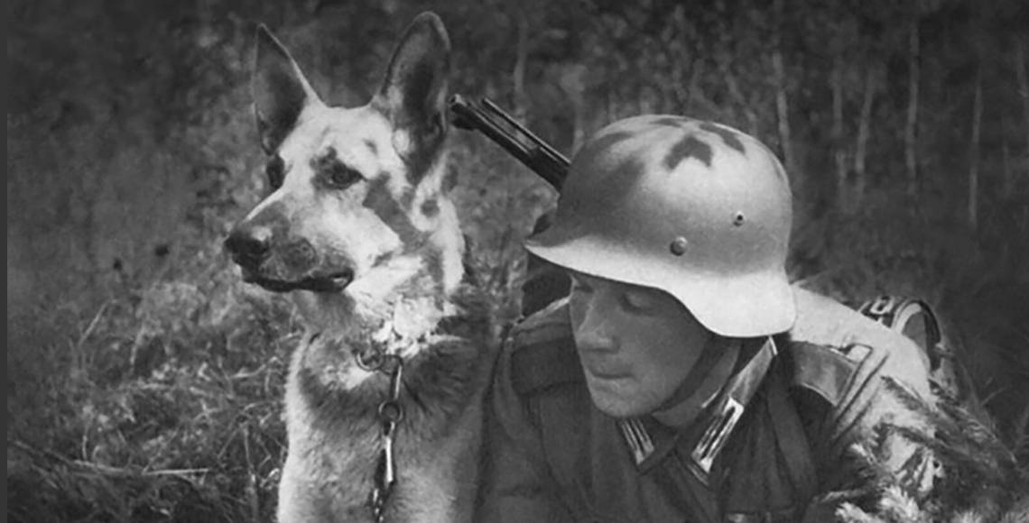 German Shepherds and World War II, how absurd can they get?