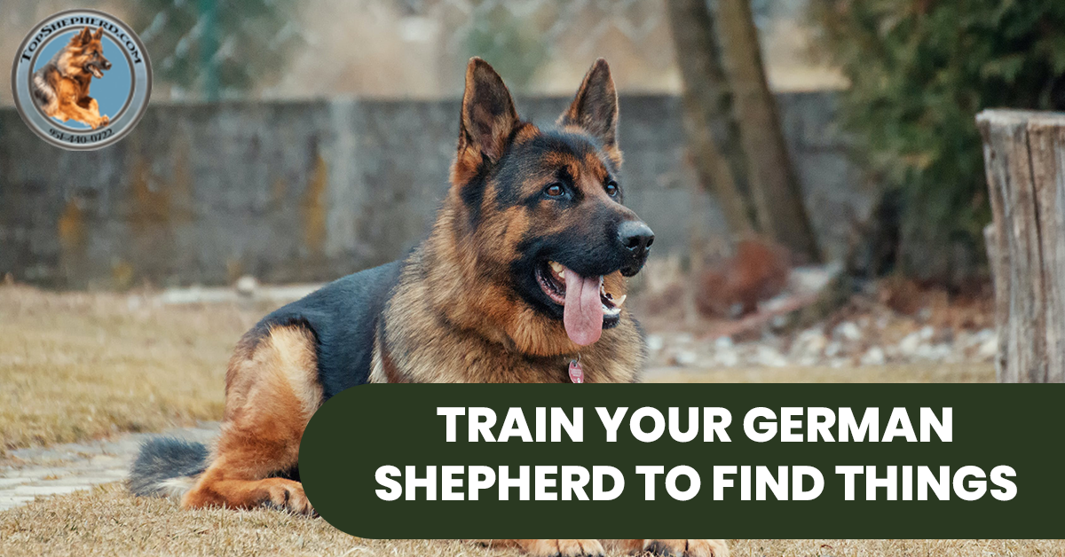TRAIN YOUR GERMAN SHEPHERD TO FIND THINGS