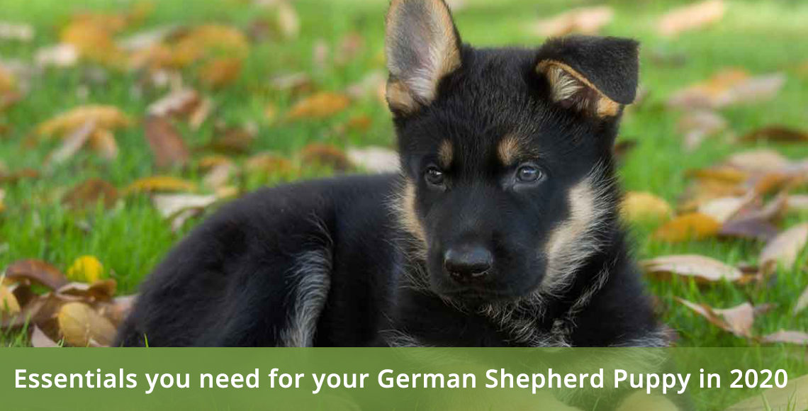 Essentials you need for your German Shepherd puppy in 2020