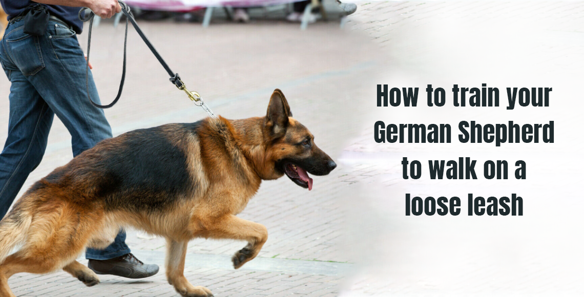 How to train your German Shepherd to walk on a loose leash