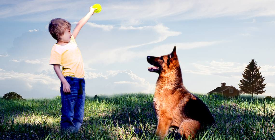 How to play with the German shepherd ?