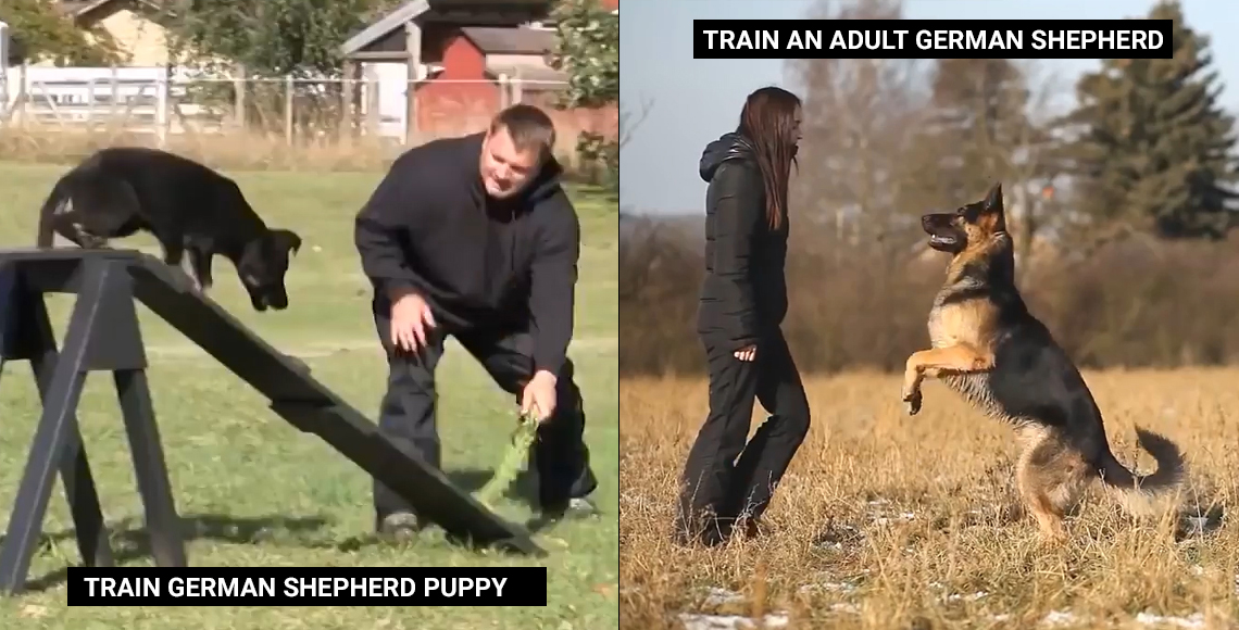 How to train German shepherd ?