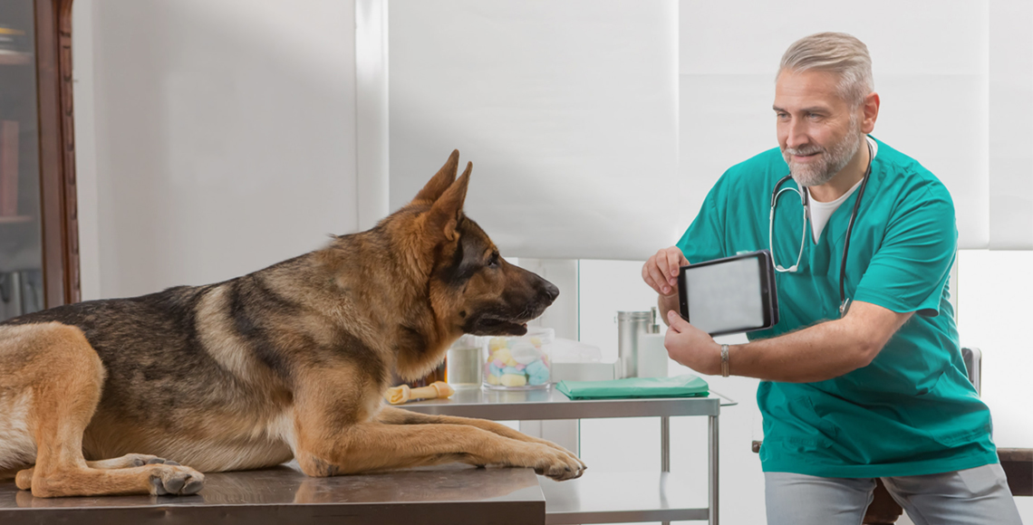How to treat your German shepherd ?